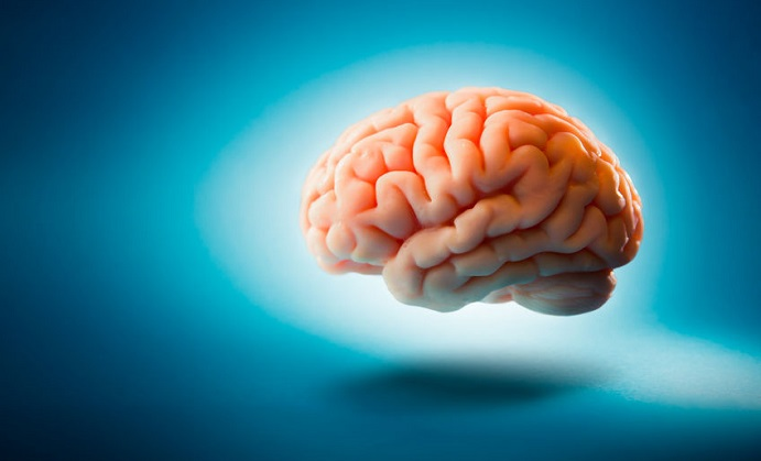How Can CoQ10 Help Your Brain?